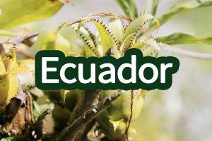 Ecuadorgallerij