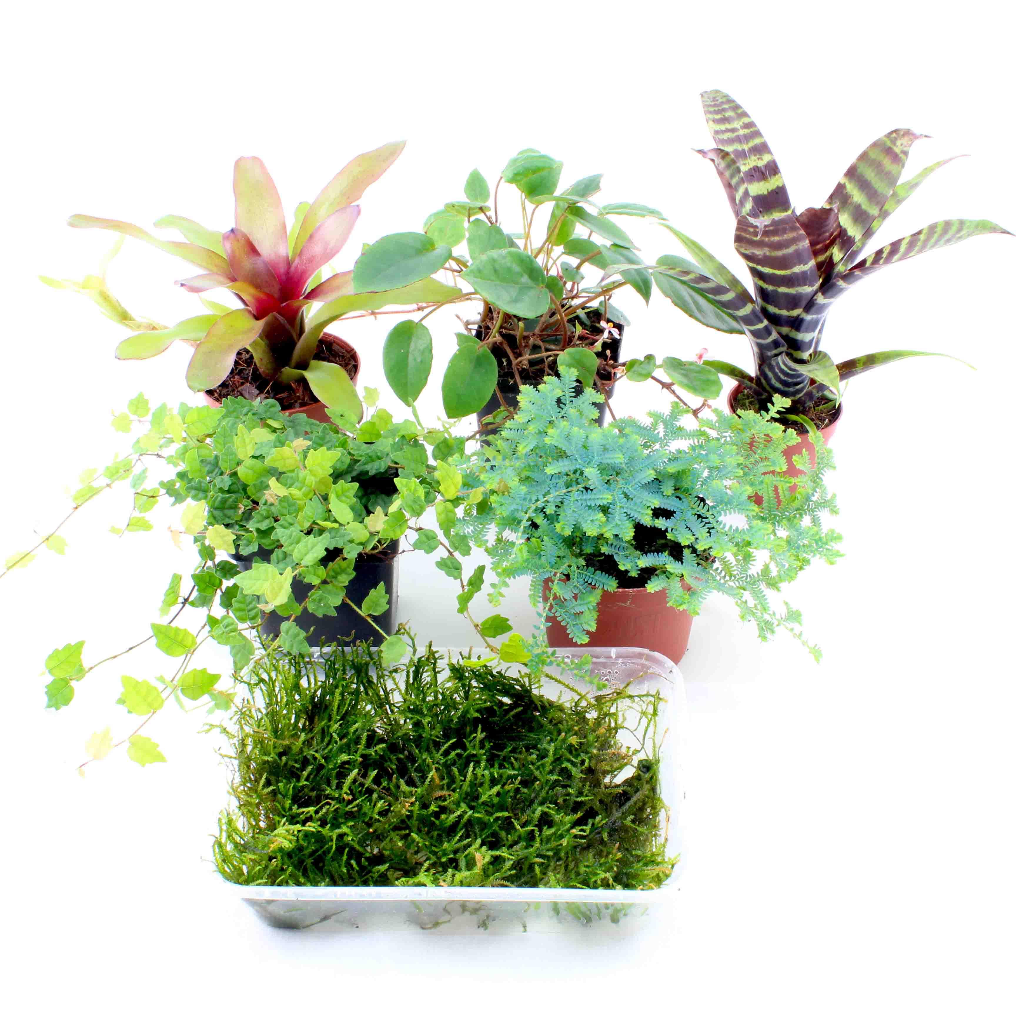 terrarienpflanzen set klein