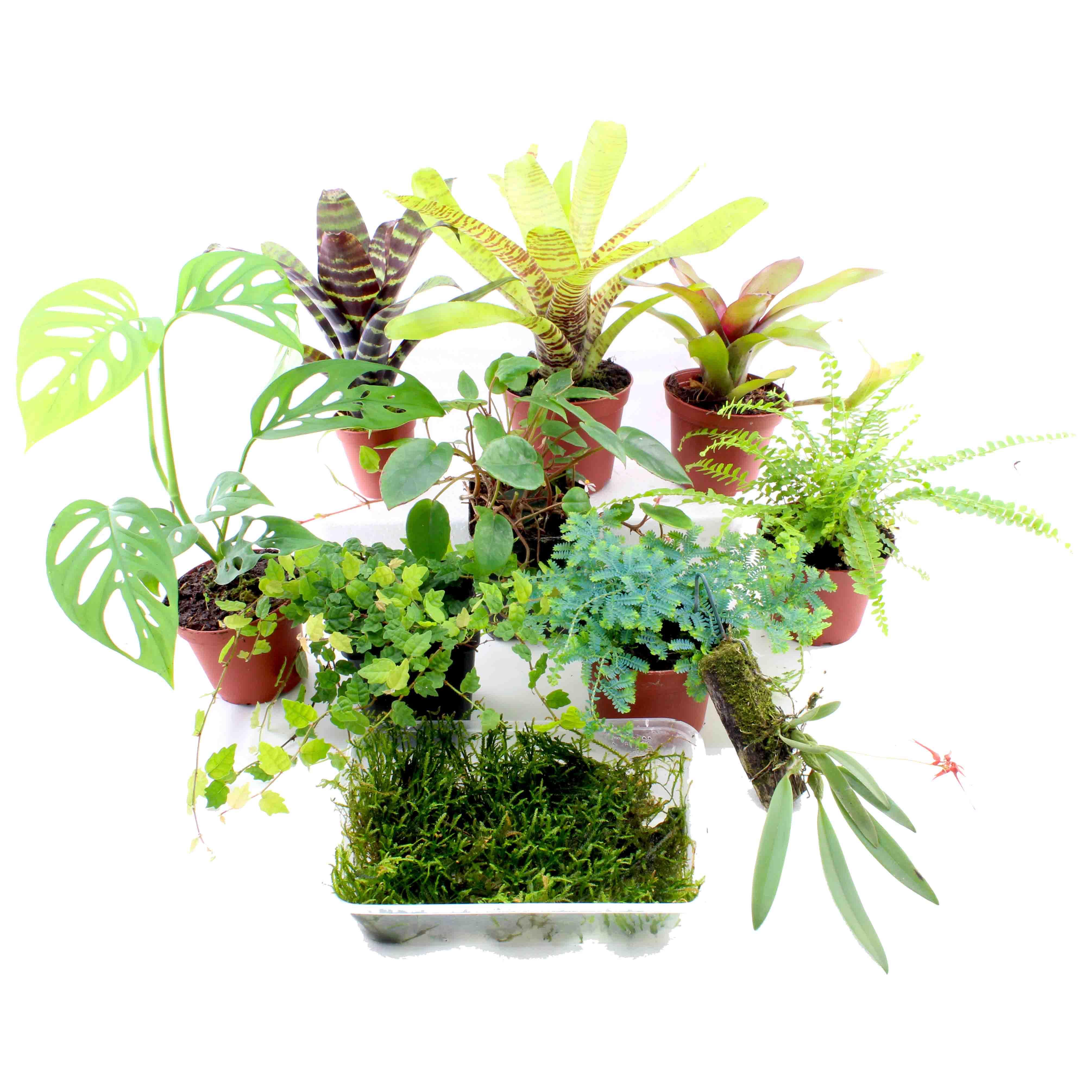 terrarienpflanzen set mittel