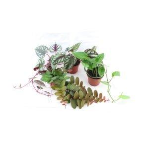 Climb- & hanging plants