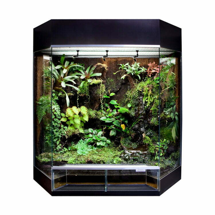 Dutchrana Terrariums Terrarium Plants Frogs Accessories