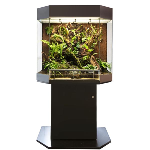 show terrarium kopen