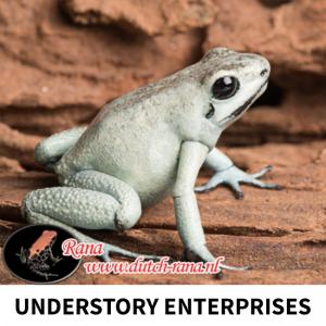 dutchrana-understory-enterprise-1
