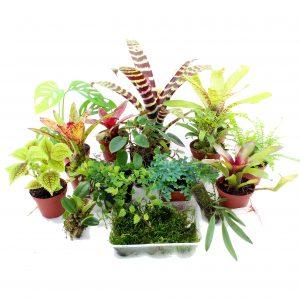 Terrariumplant Sets